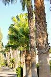 Palma Photo stock