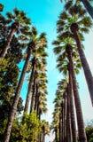Palma Стоковое Изображение RF