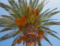 palma zdjęcia stock