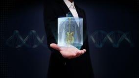 Palma aberta da mulher de negócios, ser humano dianteiro zumbindo os órgãos internos, sistema da digestão Luz azul do raio X filme
