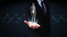 Palma abierta del hombre de negocios, ser humano femenino giratorio los órganos internos, sistema del corazón, luz azul de la rad almacen de video