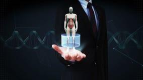 Palma abierta del hombre de negocios, ser humano femenino giratorio, sistema cardiovascular de exploración, estructura esquelétic almacen de video