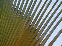 Palma abstracta foto de archivo