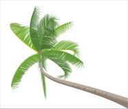 Palma aislada en blanco Imagenes de archivo
