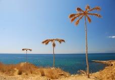 Palma-albero Fotografie Stock Libere da Diritti