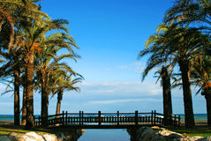 Palma-albero Fotografia Stock