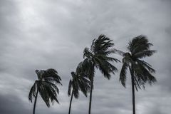 Palma all'uragano immagini stock libere da diritti