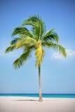 Palma alla spiaggia Immagini Stock