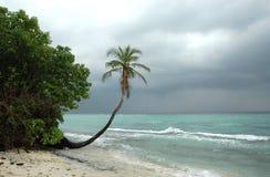 Palma alla spiaggia Fotografie Stock Libere da Diritti