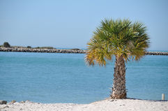 Palma alla spiaggia Fotografia Stock Libera da Diritti