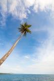 Palma alta contro il cielo Fotografia Stock Libera da Diritti