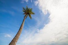 Palma alta contro il cielo Immagine Stock