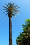 Palma in alto Sun Immagine Stock