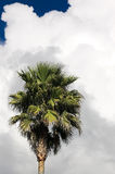 Palma antes de la tormenta Imagen de archivo libre de regalías