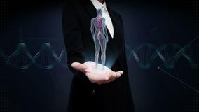 Palma aperta della donna di affari, apparato cardiovascolare umano femminile girante, sistema del sangue, luce blu dei raggi x video d archivio