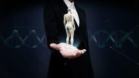 Palma aperta della donna di affari, corpo umano femminile girante, luce blu dei raggi x stock footage