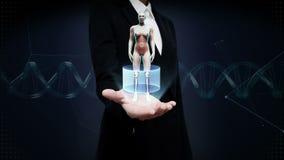 Palma aperta della donna di affari, essere umano femminile girante, apparato cardiovascolare d'esplorazione, struttura scheletric archivi video