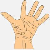 Palma aperta della mano con la diffusione delle dita Fotografie Stock Libere da Diritti