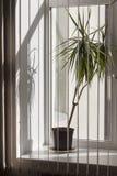Palma auf Bürofenster stockfoto