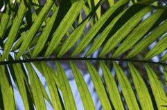 palma, blisko Fotografia Stock