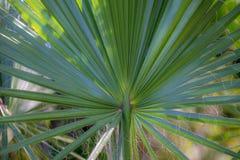 Palma, bokeh, verde, mar de adriático imagens de stock