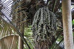 Palma bonita fotos de stock