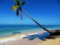 Palma caraibica della spiaggia Immagine Stock