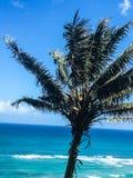 Palma che soffia nel vento sull'isola tropicale Immagine Stock