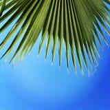 Palma, cielo, cielo blu Fotografia Stock