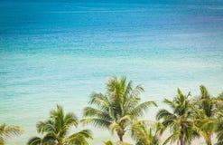 Palma con bella vista sul mare (immagine filtrata elaborata) fotografie stock libere da diritti