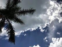 Palma con cielo blu e le nuvole Fotografie Stock Libere da Diritti