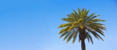 Palma (con el sitio para el texto) Imagenes de archivo
