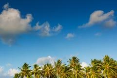 Palma con il giorno soleggiato - Maldive Fotografia Stock Libera da Diritti