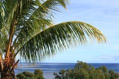 Palma con l'oceano nei precedenti Fotografie Stock Libere da Diritti