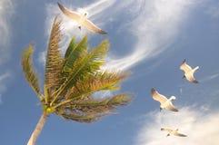 Palma con la gaviota del vuelo Imagenes de archivo