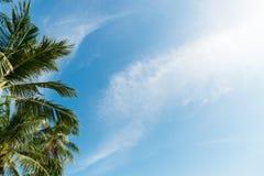 Palma con le nuvole ed il cielo blu Immagini Stock