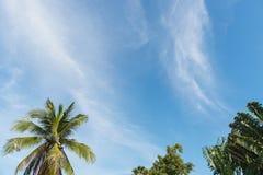 Palma con le nuvole ed il cielo blu Fotografia Stock Libera da Diritti