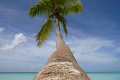 Palma con un tronco lungo che appende sopra la costa del mar dei Caraibi Intorno, silenzio, pace e Paradise luminoso immagine stock