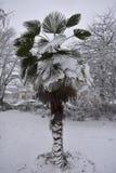 Palma congelada en invierno - jardines de Jephson, balneario de Leamington, Reino Unido - 10 de diciembre de 2017 Imagen de archivo