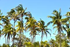 Palma contra el cielo azul Foto de archivo libre de regalías