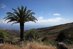Palma contro cielo blu Immagine Stock Libera da Diritti