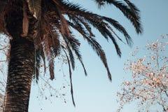 Palma contro cielo blu smorzato immagini stock libere da diritti
