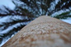 Palma contro il cielo blu Fotografie Stock Libere da Diritti