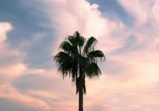 Palma contro il cielo con le nuvole immagini stock