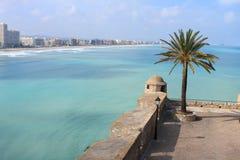 Palma contro un bello fondo della costa di mare Immagine Stock Libera da Diritti