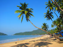 Palma curva sulla spiaggia di Palolem, Goa, India Fotografia Stock