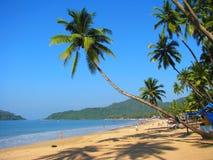 Palma curvada na praia de Palolem, Goa, India fotografia de stock