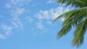 Palma d'ondeggiamento contro il cielo blu stock footage