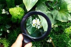 Palma da mão que guarda a lupa no jardim botânico Imagens de Stock Royalty Free