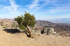 Palma da mandioca em Joshua Tree National Park, San Andreas Fault, Cali imagem de stock